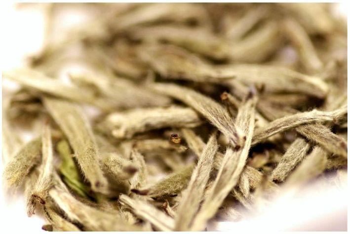 Лучшие белые чаи и почему их стоит пить