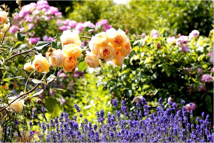 Какие цветы выбрать, чтобы в вашем доме всегда пахло красиво?