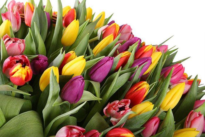Какие цветы выбрать для мужчины?